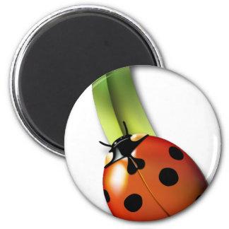 Ladybird Refrigerator Magnets