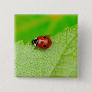 Ladybird walking across a leaf 15 cm square badge