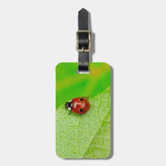 Ladybird walking across a leaf bag tag