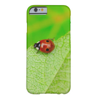Ladybird walking across a leaf barely there iPhone 6 case