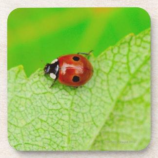 Ladybird walking across a leaf beverage coasters