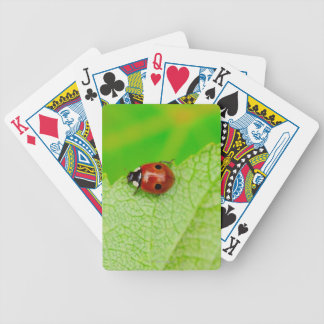 Ladybird walking across a leaf bicycle playing cards