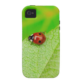 Ladybird walking across a leaf iPhone 4 cover