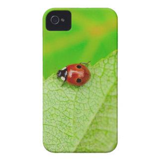 Ladybird walking across a leaf Case-Mate iPhone 4 case
