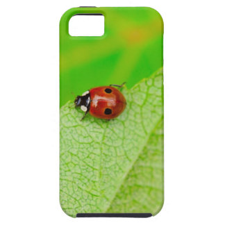 Ladybird walking across a leaf case for the iPhone 5