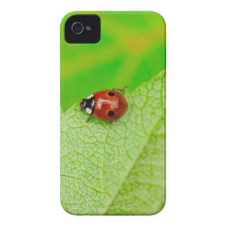 Ladybird walking across a leaf Case-Mate iPhone 4 cases
