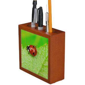 Ladybird walking across a leaf desk organiser