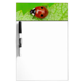 Ladybird walking across a leaf dry erase board
