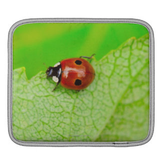 Ladybird walking across a leaf iPad sleeve