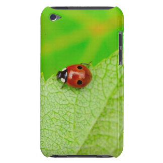 Ladybird walking across a leaf iPod touch case