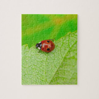 Ladybird walking across a leaf jigsaw puzzle