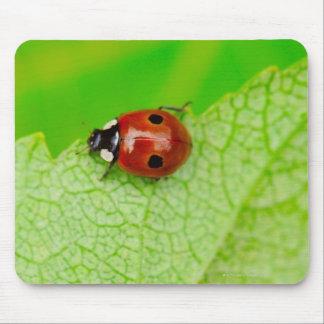 Ladybird walking across a leaf mouse pad