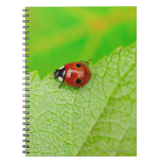 Ladybird walking across a leaf notebooks