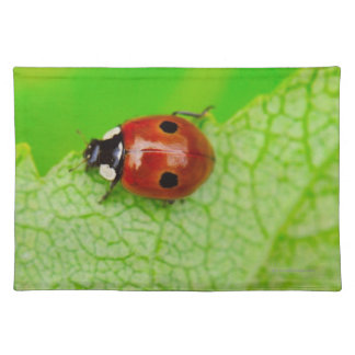 Ladybird walking across a leaf placemat