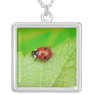 Ladybird walking across a leaf silver plated necklace
