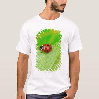 Ladybird walking across a leaf T-Shirt