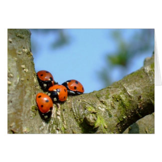 Ladybirds Card