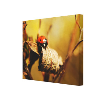 Ladybirds In Autumn. Canvas Print