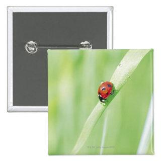 Ladybug 15 Cm Square Badge