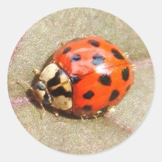 Ladybug 225 ~ sticker