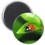Ladybug 6 Cm Round Magnet