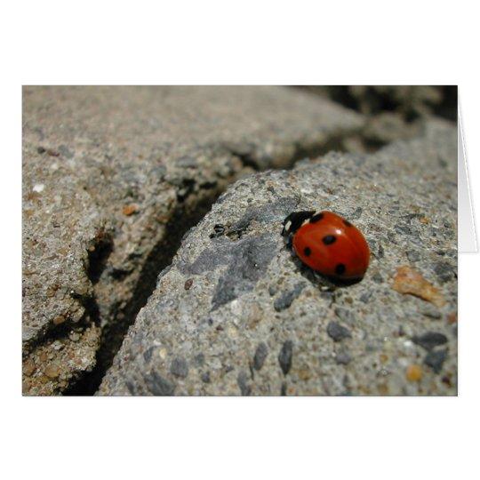 ladybug an the kurb (sidewalk) card