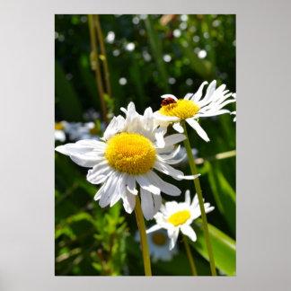 Ladybug and Daisies Poster