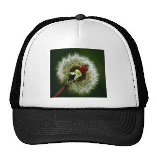 Ladybug And Dandelion Hat