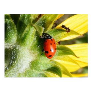 Ladybug & Ant Postcard
