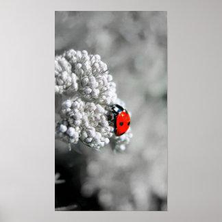 Ladybug - B&W Poster