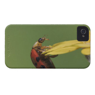Ladybug Beetle, Coccinellidae, adult on flower, iPhone 4 Cover