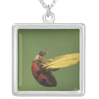 Ladybug Beetle, Coccinellidae, adult on flower, Silver Plated Necklace