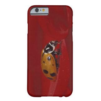 Ladybug Beetle. (Hippodamia convergens) 2 Barely There iPhone 6 Case