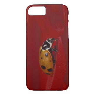 Ladybug Beetle. (Hippodamia convergens) 2 iPhone 8/7 Case