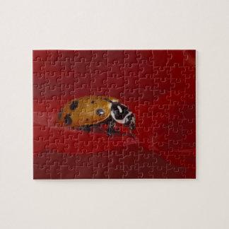 Ladybug Beetle. (Hippodamia convergens) 2 Puzzle