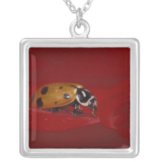 Ladybug Beetle. (Hippodamia convergens) 2 Silver Plated Necklace