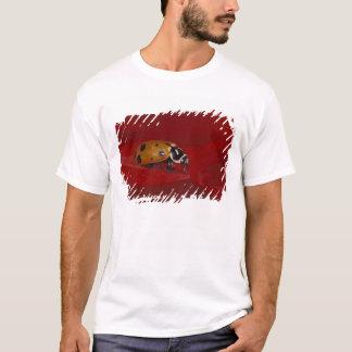 Ladybug Beetle. (Hippodamia convergens) 2 T-Shirt