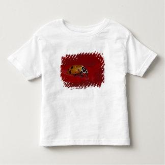 Ladybug Beetle. (Hippodamia convergens) 2 Toddler T-Shirt
