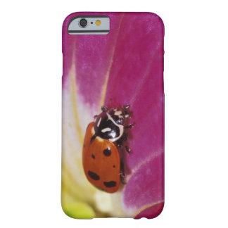 Ladybug Beetle. (Hippodamia convergens) Barely There iPhone 6 Case