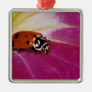 Ladybug Beetle. (Hippodamia convergens) Christmas Ornament