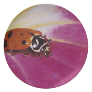 Ladybug Beetle. (Hippodamia convergens) Dinner Plates