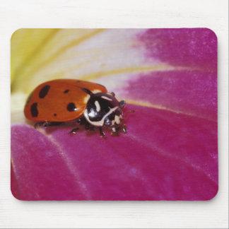 Ladybug Beetle. (Hippodamia convergens) Mouse Mat