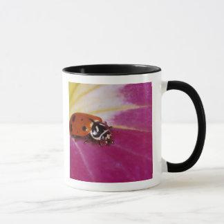 Ladybug Beetle. (Hippodamia convergens) Mug