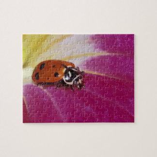 Ladybug Beetle. (Hippodamia convergens) Puzzle