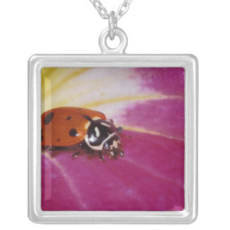 Ladybug Beetle. (Hippodamia convergens) Silver Plated Necklace