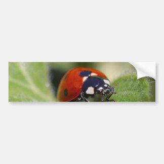 Ladybug Car Bumper Sticker