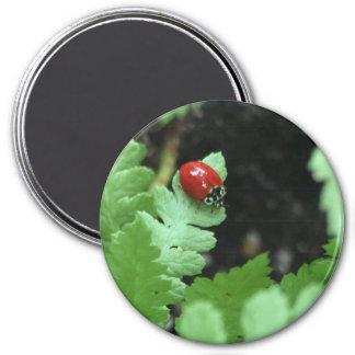 Ladybug button magnet