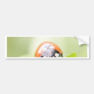 Ladybug by Tutti Bumper Stickers