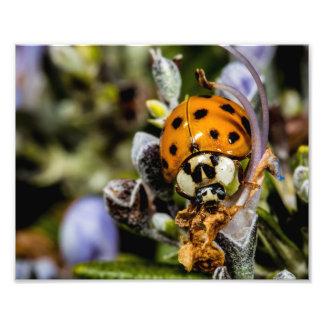 Ladybug Climbing On A Flower Photo Art