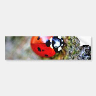 Ladybug Crawling on Tree Trunk Bumper Stickers
